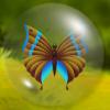 ButterflyMatch