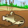 Play Catfish Fry game!