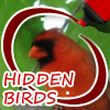 Hidden Birds game