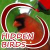 Play Hidden Birds game!
