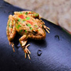 Jigsaw: Frog on Seat game