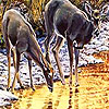 Lovely Deers In The Rivers Jigsaw game